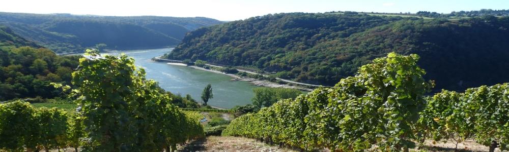Urlaub in der Region Rheingau