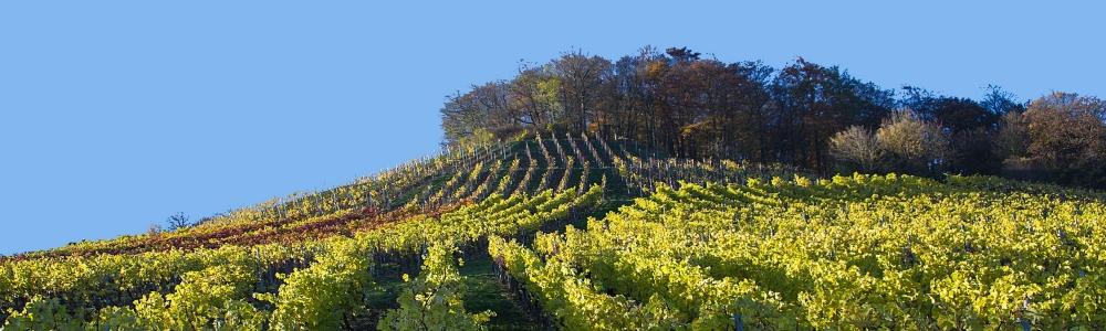 Urlaub in der Region Steigerwald
